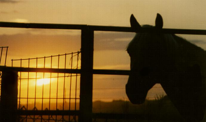 horsesunset.jpg